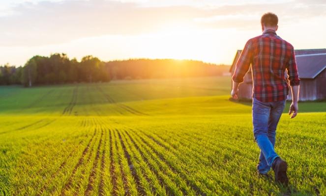 Раздел фермерского хозяйства